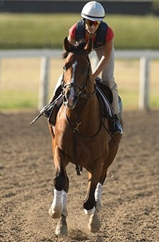 Lucky Lindy - Woodbine, August 12, 2015.