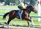 "Tonalist breezed five furlongs at Saratoga's Oklahoma training track, clocking 1:02.55.<br><a target=""blank"" href=""http://photos.bloodhorse.com/AtTheRaces-1/At-the-Races-2015/i-PbXSxFR"">Order This Photo</a>"