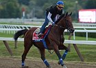 "American Pharoah gets acquainted with the Saratoga track.<br><a target=""blank"" href=""http://photos.bloodhorse.com/AtTheRaces-1/At-the-Races-2015/i-zfNS3xL"">Order This Photo</a>"