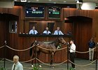 Hip 214, a filly by Arch, brought $320,000 to top the select portion of the sale.