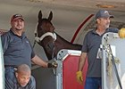 "American Pharoah arrives<br><a target=""blank"" href=""http://photos.bloodhorse.com/AtTheRaces-1/At-the-Races-2015/i-HxZgfc4"">Order This Photo</a>"