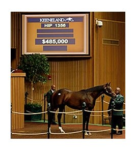 Hip 1356, a bay colt by Mineshaft, brought a winning bid of $485,000.
