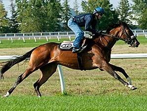 Platinum Glory preps for the Woodbine Mile.