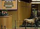 Hip 759, a filly by Tapit, brought $475,000 on Sept. 18 at the Keeneland September yearling sale.