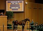 Hip 1356, a colt by Mineshaft, sold for $485,000 to top the session.