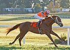 Da Big Hoss comes home strong to win the Kentucky Turf Cup Stakes.