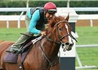 Judy the Beauty worked Sept. 27 at Keeneland
