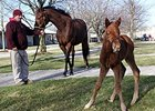 Canadian Horse of the Year and Canadian Filly Triple Crown winner Sealy Hill with her 2013 Distorted Humor filly.