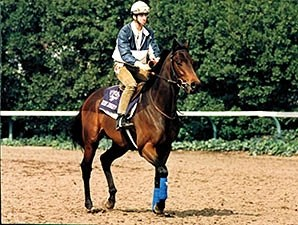Green Desert competed in the 1986 Breeders' Cup Sprint.