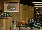 Hip 530 by Tapit sold for $1.65 million.
