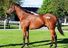 Lot 164, a Kodiac colt, brought â'¬130,000 (US$ 144,723).
