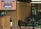 Hip 1541 by Harlan's Holiday sells for $285,000.