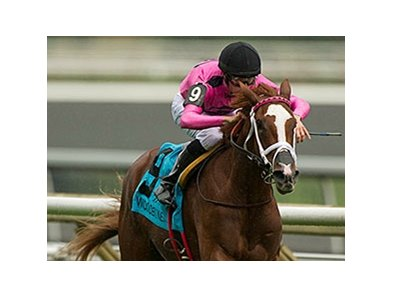 Catch a Glimpse was named Canada's Horse of the Year for 2015.