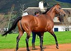 Duke of Marmalade's first South African foals arrive this year