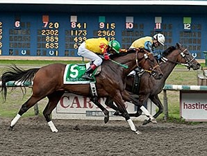 Academic wins the British Columbia Derby.