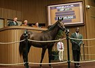 Distorted Humor Colt Surpasses $1.5 Million