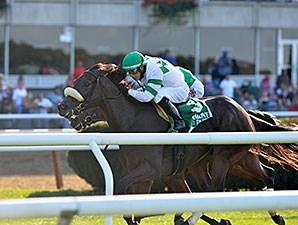Recepta wins the 2015 Noble Damsel.
