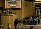 Hip 775, a colt by The Factor, brought $600,000 Sept. 18 at the Keeneland September yearling sale.