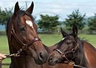 Through the Lens: Mares in Japan 2012