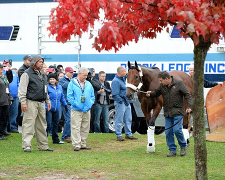 Caption: American Pharaoh arrives at Keeneland for the Breeders' Classic on Oct. 27, 2015. Jimmy Barnes