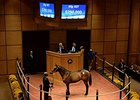 $290,000 The Factor Colt Leads FT Oct Day 3