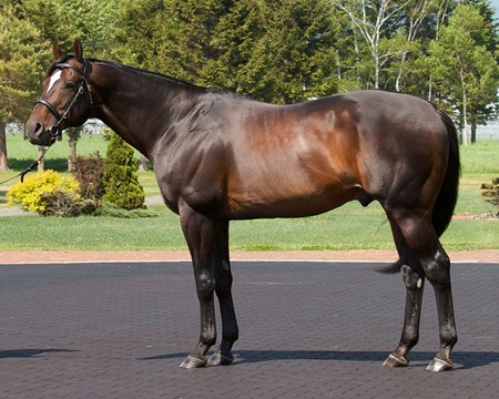 Empire Maker at the JBBA's Shizunai Stallion Station in June 2013