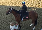 The Pizza Man prepares to work on the Churchill Downs turf.