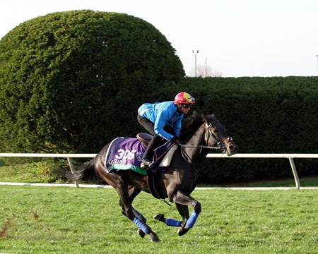 Golden Horn (Breeders' Cup Turf) on the turf course at Keeneland on October 29, 2015. Photo By: Chad B. Harmon