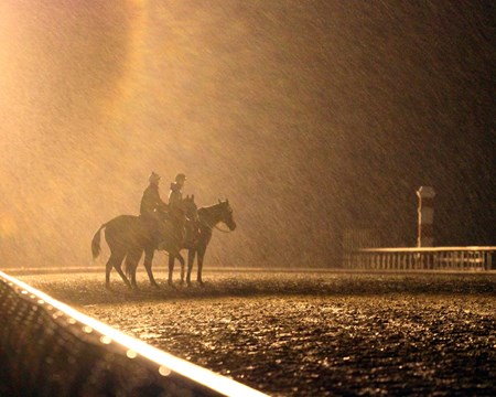 A horse waits to train in a driving rainstorm at Keeneland on October 28, 2015. Photo By: Chad B. Harmon