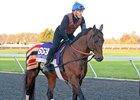 Red Vine prepping for the 2015 Las Vegas Breeders' Cup Dirt Mile (G1)