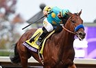 "American Pharoah romped in Breeders' Cup Classic.<br><a target=""blank"" href=""http://photos.bloodhorse.com/BreedersCup/2015-Breeders-Cup/Breeders-Cup-Classic/"">Order This Photo</a>"