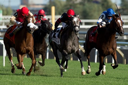 Jockey David Moran guides Secret Action to victory in the $150,000 Carotene Stakes at Woodbine Racetrack.