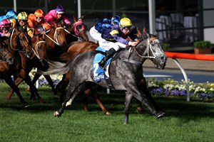 Short-priced favorite Chautauqua roared home from last and won the Aus$1million William Hill Manikato Stakes (Aus-I) at Moonee Valley's night meeting, stamping himself one of Australia's top sprinters.