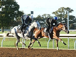 Curalina (inside) worked in company with Race Day.