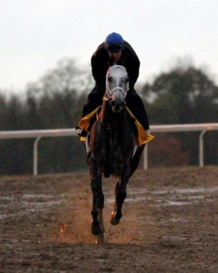 Frosted (Breeders' Cup Classic) on the track at Keeneland on October 28, 2015. Photo By: Chad B. Harmon