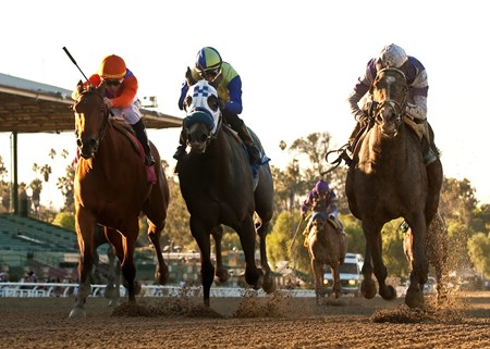 Zillah Reddam's Renee's Titan and jockey Tyler Baze, right, overpower Beholder (Garrett Gomez), left, and Dawn's Charm (Edwin Maldonado), second from left, to win the Grade II, $150,000 Santa Ynez Stakes, Monday, Jaunary 21, 2013 at Santa Anita Park, Arcadia CA. © BENOIT PHOTO