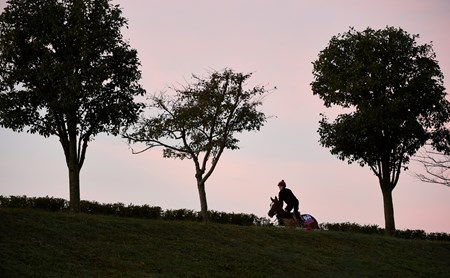 Breeders' Cup Juvenile Fillies Turf entrant Alice Springs goes out for exercise on the main track of Keeneland Race Course Thursday morning Oct. 29, 2015 in Lexington, KY.  (Skip Dickstein