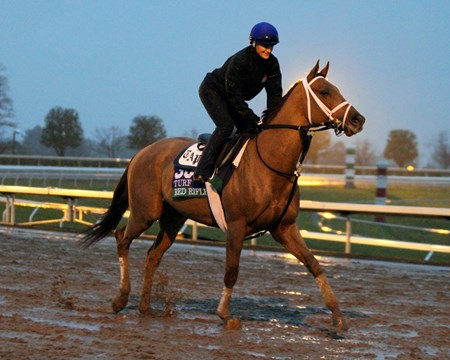 Red Rifle (Breeders' Cup Turf) on the track at Keeneland on October 28, 2015. Photo By: Chad B. Harmon