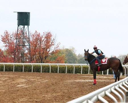 Mongolian Saturday - Morning Training - Keeneland Race Course - 102415