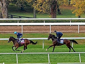 Ruby Notion and Sheikh of Sheikhs at Keeneland for the Breeders' Cup Oct. 25.