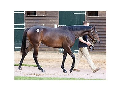 The third-day's topper was a Street Cry filly purchased for 800,000 guineas ($1,285,200).
