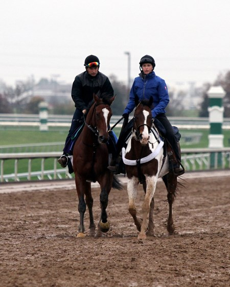 Grand Arch (Breeders' Cup Turf) on the track at Keeneland on October 27, 2015. Photo By: Chad B. Harmon