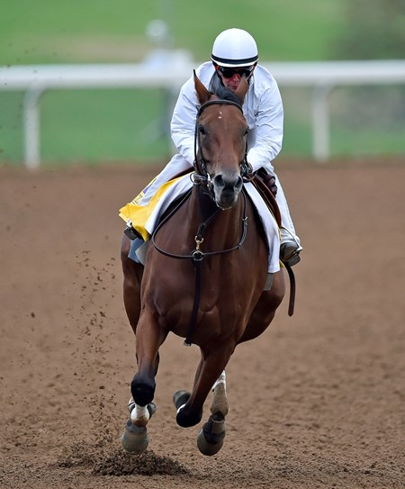 (October 26, 2015) Champion Beholder works five furlongs in :59 2 Monday morning at Keeneland...