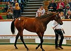 Lot 30, a Galileo filly, brought 1.3 million guineas.