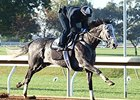 Liam's Map breezed five furlongs at Keeneland Race Course the morning of Oct. 11.
