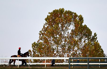 Breeders' Cup Classic entrant Gleneagles goes out for exercise on the main track of Keeneland Race Course Thursday morning Oct. 29, 2015 in Lexington, KY.  (Skip Dickstein