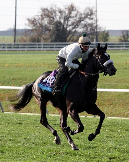 Highland Sky (Breeders' Cup Juvenile Turf) on the turf course at Keeneland on October 29, 2015. Photo By: Chad B. Harmon