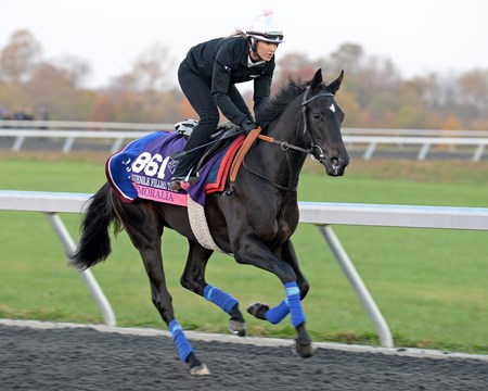 Caption: Nemoralia