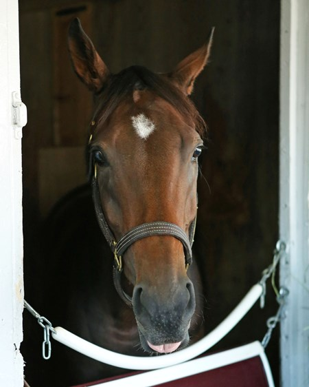 Yahilwa - Barn Area - Keeneland Race Course - 100915