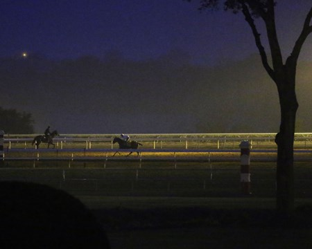 Beholder - Morning Workout - Keeneland Race Course - 102415